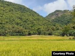 Areal persawahan yang mengandalkan sumber mata air dari bukit karst di kampung Luwuk, desa Satar Punda, Kecamatan Lamba Leda, Manggarai Timur, NTT. (Juni 2020) Foto : JPIC OFM Indonesia
