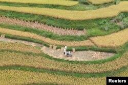 중국 남서부 구이저우성 첸난의 논. (자료사진)