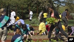 First lady Michelle Obama carries mustard plants for planting as she is joined by school children from across the country for the fourth annual White House Kitchen Garden spring planting, Monday, March 26,2012, at the White House.