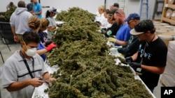También se establecería, entre otros puntos, los mecanismos para la comercialización regulada de la marihuana, los impuestos que la gravarían y las restricciones referidas a la publicidad.