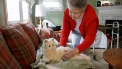 Quiz - Scientists Aim to Give AI to Robot Cat That Helps the Elderly