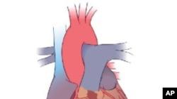 心脏示意图