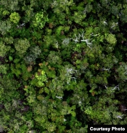 The view of the Amazon forest looking down from the tree top. (Greg Asner)