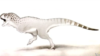 'African' Dinosaur Discovered in Morocco