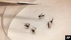 Los funcionarios instaron a los residentes de Florida evitar las picaduras de mosquitos, pero dijeron que no había motivo de alarma.