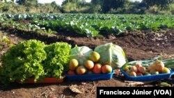 Campo agrícola, Tete, Moçambique