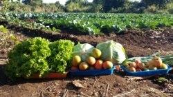 Aumenta a usurpação de terras em Moçambique