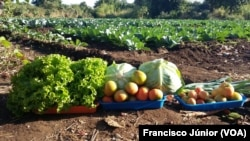 Fundo Soberano poderá impulsionar a agriculra, dizem economistas. Campo agrícola, Tete, Moçambique.