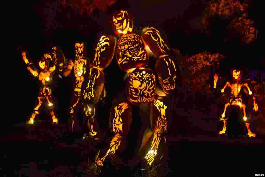 គោមល្ពៅ Jack O'Lanterns ត្រូវបានរចនាជាគ្រោងឆ្អឹង ហើយដាក់បង្ហាញនៅទីធ្លាសារមន្ទីរប្រវត្តិសាស្រ្ត Van Cortlandt Manor House and Museum អំឡុងកម្មវិធី «Great Jack O'Lantern Blaze» នៅ Croton-On-Hudson បុរីញូវយ៉ក។
