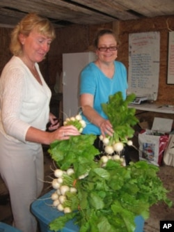 Groundworks Farm CSA members Jill Maynard Nolan (in white) and Meredith McCartney Smith pick up vegetables.