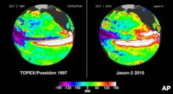 These false-color images provided by NASA satellites compare warm Pacific Ocean water temperatures from the strong El Nino that brought North America large amounts of rainfall in 1997, left, and the current El Nino as of Oct. 1, 2015, right.