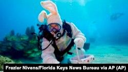 «Підводний Великоднія заяць» - пірнальник в костюмі Великоднього зайця розкладає варені яйця під водою в заповіднику Флорида Кіз перед традиційною у США Великодньою забавою