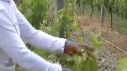 Bujqësia në Shqipëri
