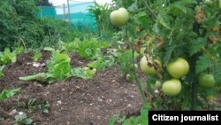 Many farmers are involved in subsistence farming in Zimbabwe.