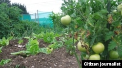 Many farmers are involved in subsistence farming in Zimbabwe despite the introduction of land reforms in 2000.
