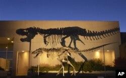 Bộ xương loài khủng long loài ăn thịt khổng lồ máu lạnh Tyrannosaurus Rex