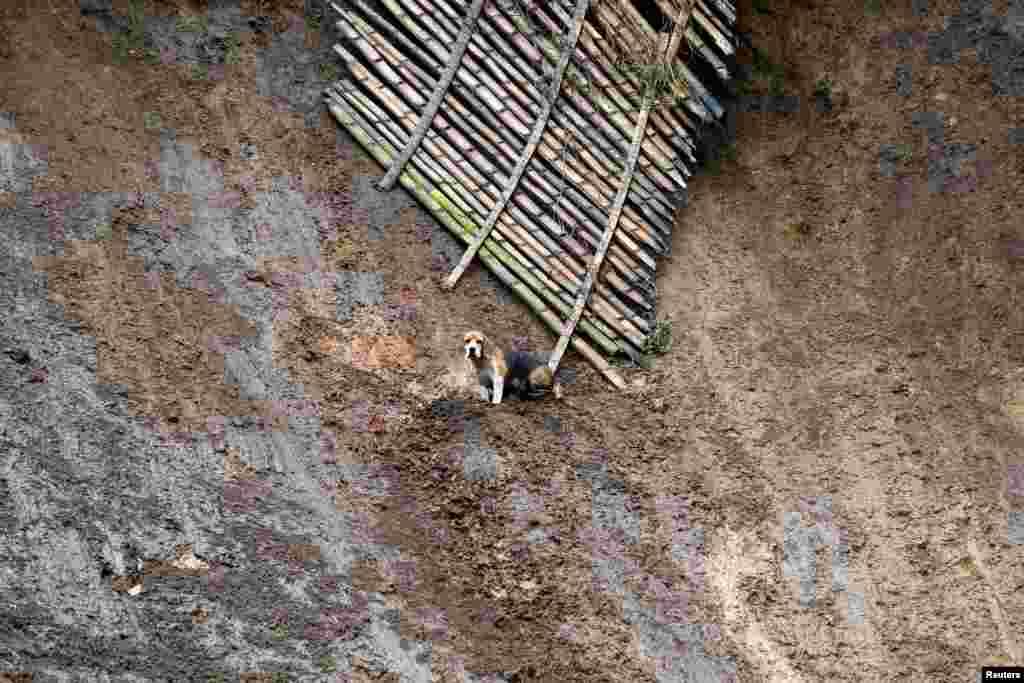 Seekor anjing tampak menunggu untuk diselamatkan setelah bencana tanah longsor melanda kawasan permukiman di kota Manizales, Kolombia.