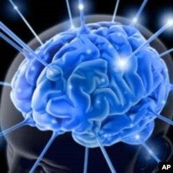 دماغ کی بیٹری