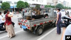 FILE - Activists intercept a truck in a Yulin dog meat market and bargain for the lives of animals on their way to slaughter, June 20, 2014.