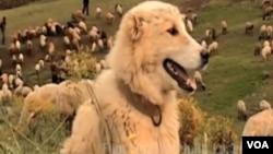 Köç filmindən kadr (Kadr Youtube.com saytından götürülüb)