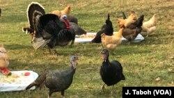 Kudliwa ingalukuni ngelanga le Thanksgiving
