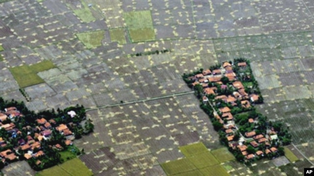 An aerial survey mission by Greenpeace over Sumatra island shows how La Nina played a big role in decreasing agricultural output and caused flooding across Indonesia that also reduced production of some crops, Tangerang, west of Jakarta, 16 Oct. 2010