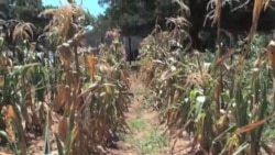 Арканзас: как бороться с засухой