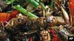 উপকারি পোকা দিয়ে ক্ষতিকর পোকা দমন নিয়ে কথা বললেন ডঃ বদরুল আমীন ভুঁইয়া