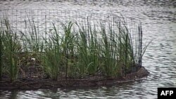 Kaliteli Suya Erişim İçin Yüzen Adalar