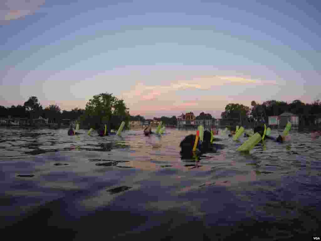 Por tres horas y media, realizamos 6 inmersiones observando la rutina de estos sirénidos. [Foto: Juan José Posada, VOA].
