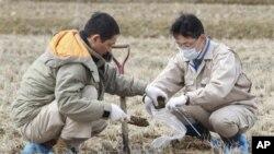 Ραδιενέργεια ακόμη και στις σορούς των θυμάτων στην Φουκουσίμα