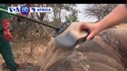 VOA60 Africa - October 2, 2013