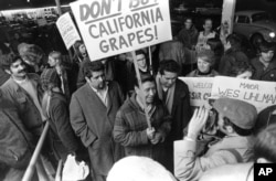 FILE - United Farm Workers President Cesar Chavez, carrying a sign calling for a boycott of California table grapes, leads about 400 people picketing a supermarket in Seattle, Dec. 19, 1969.