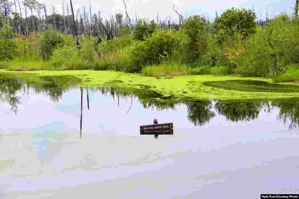 در مرداب اوکیفینوکی، تقریباً ۲۰۰ کیلومتر مسیر قایق سواری با قایقهای پارویی، پدالی و موتوری وجود دارد.