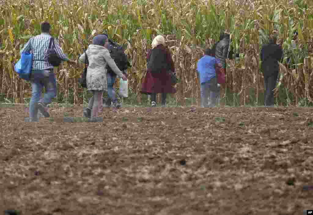 Migrants run into a corn field.