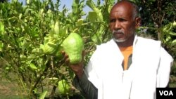 Tigray-Farmer-Researcher