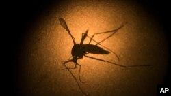 Hỏi đáp Y học: Virút zika