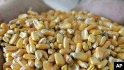 Ministros do G-20 alarmados com segurança alimentar