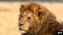 У США з приватного заповідника втекли дикі й небезпечні тварини
