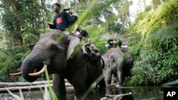 "Petugas penjaga satwa liar ""Flying Squad"" tengah berpatroli di pusat perlindungan satwa, Taman Nasional Tesso Nilo di Riau, Sumatra Tengah, Indonesia, 28 April 2008 (Foto: dok). Puluhan ekor gajah dilaporkan telah mati akibat diracun dalam beberapa tahun terakhir di Sumatra."