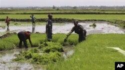 Pendirian CIC memungkinkan usaha kecil dan menengah di Kenya dan daerah sekitarnya menanggapi perubahan iklim dengan mengembangkan sektor-sektor seperti energi, pertanian dan pasokan air (foto: dok)..