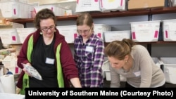 Students at the University of Southern Maine