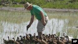 Petani di Negara bagian Vermont ini mendapat bantuan dana untuk meningkatkan produksi beras di wilayah Amerika timur laut yang beriklim sub-tropis (foto: dok).