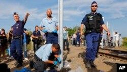 Công nhân bắt đầu xây dựng hàng rào đóng đường biên giới giữa Serbia và Hungary, ngày 14/9/2015.