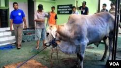 Warga bersiap melakukan penyembelihan hewan kurban di salah satu Masjid di Yogyakarta, Minggu 5/10 (foto: VOA/Nurhadi).