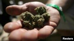 華盛頓市議會正在試圖通過合法化大麻的議案。
