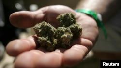 Un participant de l'exposition internationale du cannabis tient quelques grammes de marijuana dans ses mains à Oakland, Californie, le 3 septembre 2011.