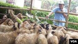 Salah satu lokasi penampungan hewan kurban dikawasan Menteng Jakarta Pusat dalam menyambut Idul Adha.