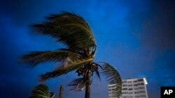 Fato sa a montre yon pye kokoye ki t ap pran gwo frap anba van Siklòn Dorian pandan li t ap pase sou Zile Bahamas yo, dimanch premye septanm 2019 la (Foto: AP/Ramon Espinosa)..