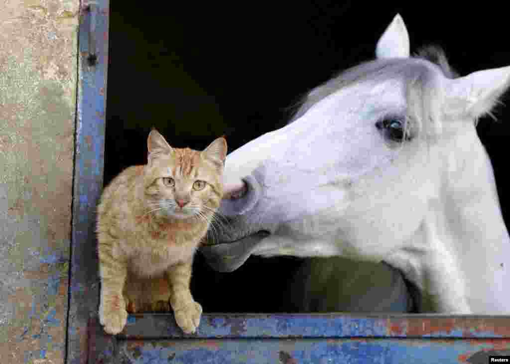 دوستی گربه و اسب ، بیروت لبنان